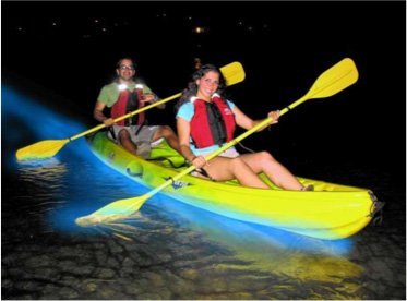 Bioluminescence Bay Tours Starting at $65 Per Person