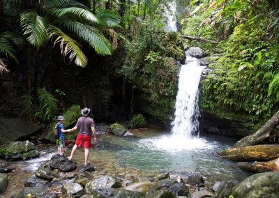 """El Yunque"" Rain Forest Excursion $75 Per Person"
