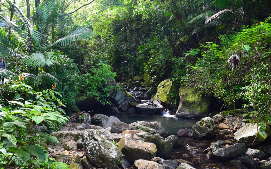 Visit The Massive Rainforests of Puerto Rico
